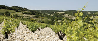 Rhone Wines - Glengarry Wine