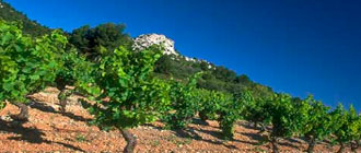 South Of France Wines - Glengarry Wine